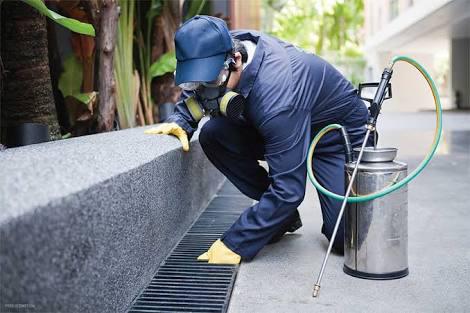 Necessities of Having Pest Control